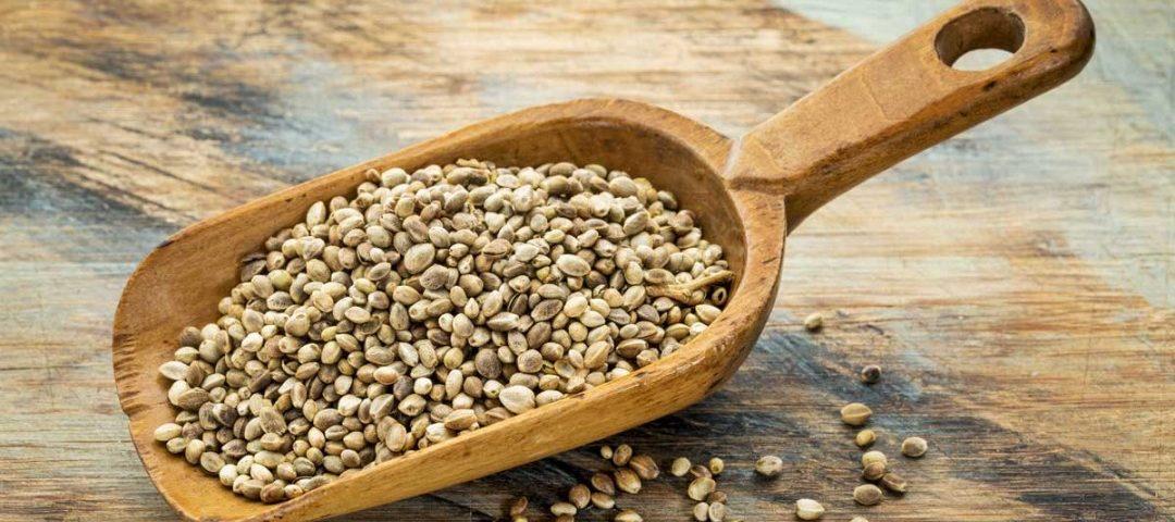 Seminte de canepa